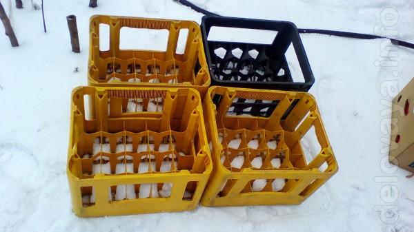 Продам ящики для пива. Цена 50 грн. за ящик