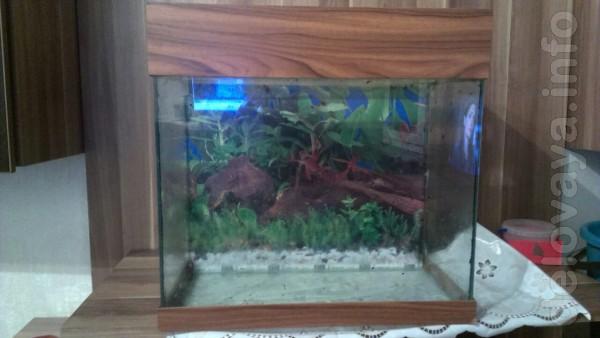 Продам два аквариума на 50 л и 250 л.За отдельную плату имеется обогр