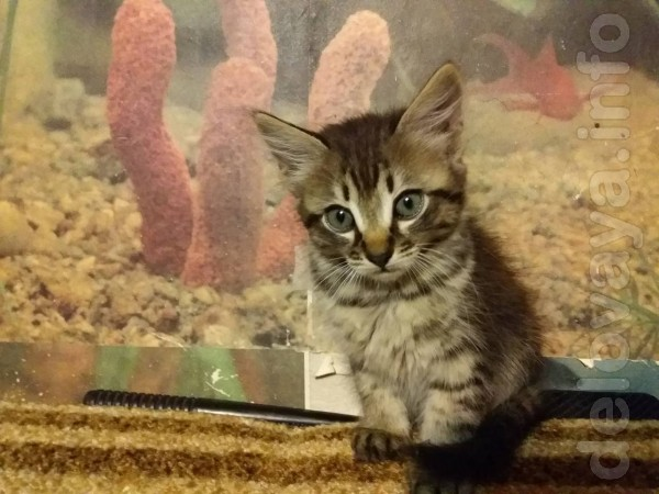 Отдам котят в хорошие руки, игривы, едят все. Котята ждут Вас