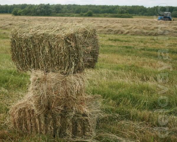 Продам луговое сено в тюках. 15-20 кг - 1 тюк. Вкусное! Сам нахожусь