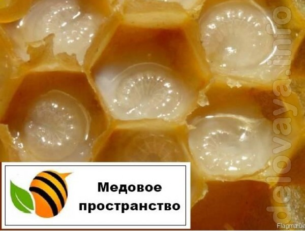 Трутневе молочко (Гомогенат) - це цінний натуральний біологічно актив