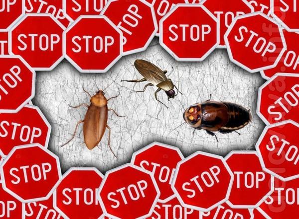 Уничтожение постельных клопов, тараканов, блох и других синантропных