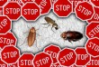 Профессиональное уничтожение тараканов, постельных клопов и блох