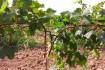 Производим Опоры и колышки  для растений из композитных материалов Po фото № 1