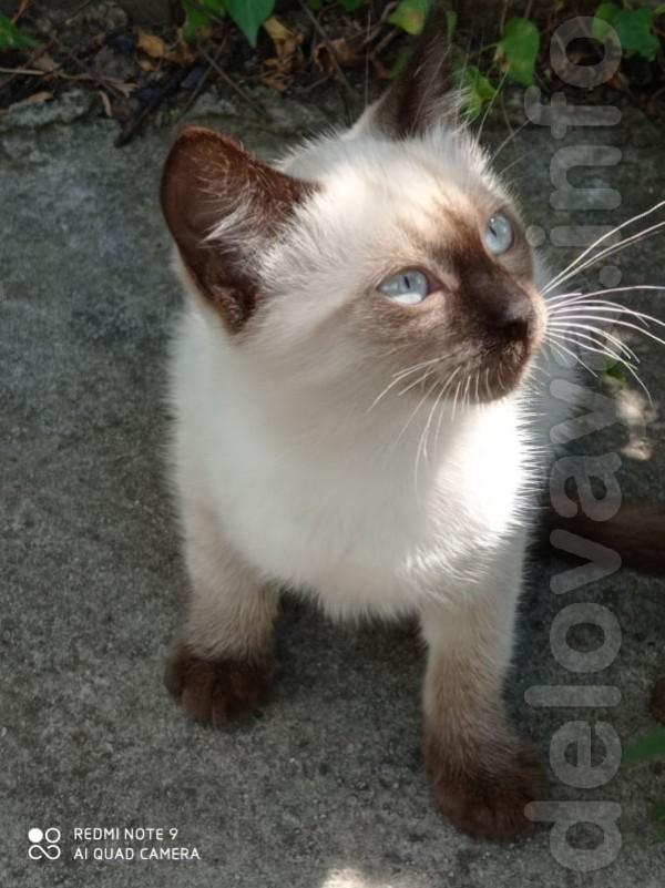 Лисичанск! Срочно!Котята в добрые руки! Бездомная кошка привела котят