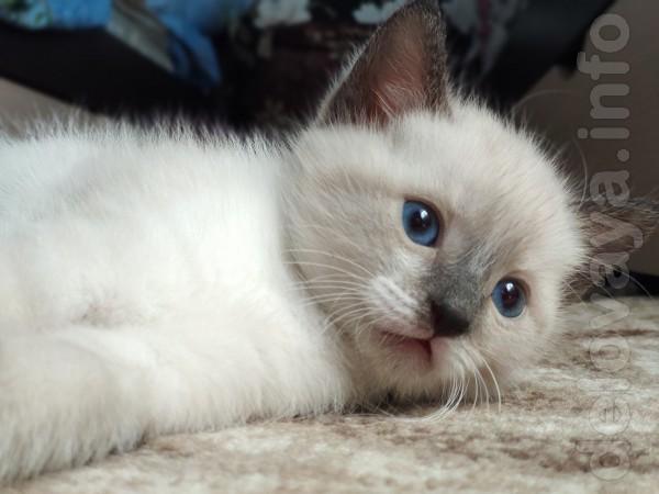 Отдам котят в добрые руки, возраст 1 месяц.  Анна 050-820-36-87. Зво