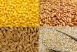 Підприємство на постійній основі закуповує соняшник, пшеницю, ячмінь,