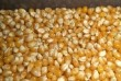 Продам зерно. Кукуруза, пшеница, ячмень по 7,50. отруби. Есть доставка