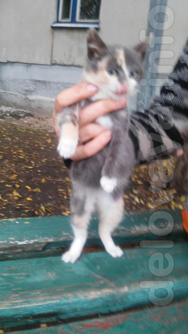 Отдам котят в хорошие руки. Лисичанск, Пролетарск.