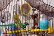 2 попугая по цене одного:)
