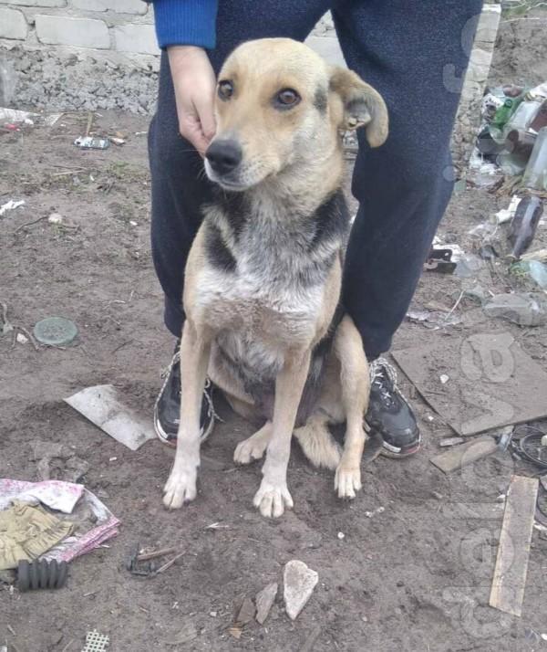 Найда - молодая собака, брошенная хозяевами в Вороново, соседи в посл