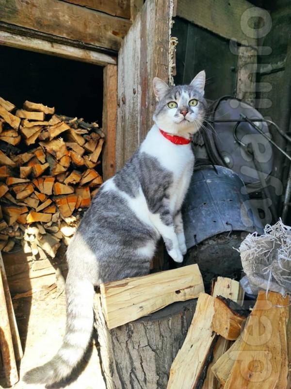 Молодому и обаятельному котику Кузе нужен дом и семья! Кузя крупный к