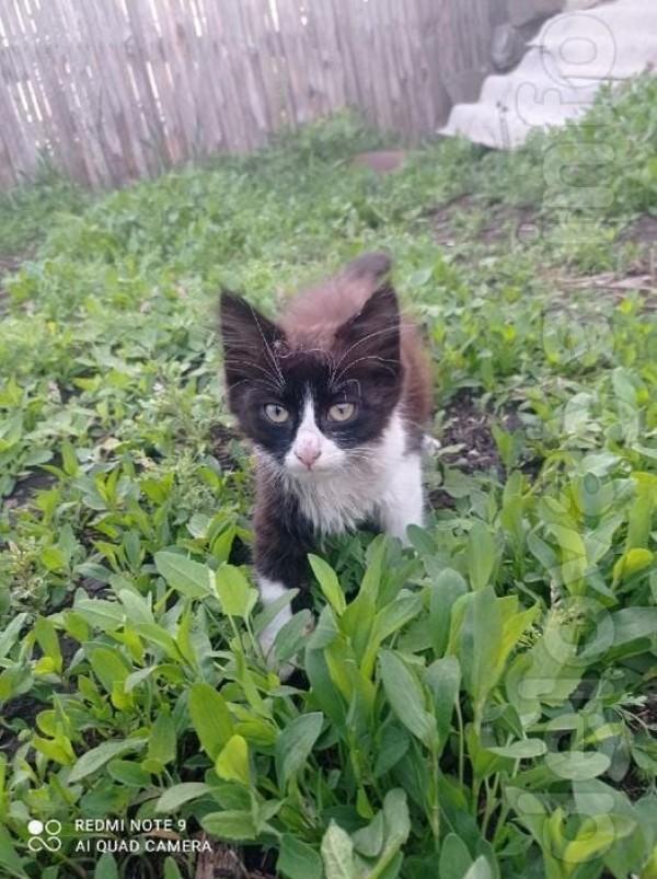 Ищем дом для котенка! Люди сняли девочку со столба Возраст около 2 ме
