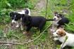 Пятеро щенков живут в заброшенном доме . Два мальчика и три девочки . фото № 4