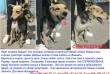 Ищет хозяина Найда!Это молодая, активная и мегапозитивная собака!