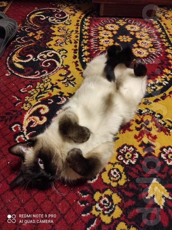 Пропала кошка РТИ. Просьба вернуть за вознаграждение