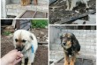Это собачки с одного помёта, Лёлик и Болик, возраст чуть больше года.