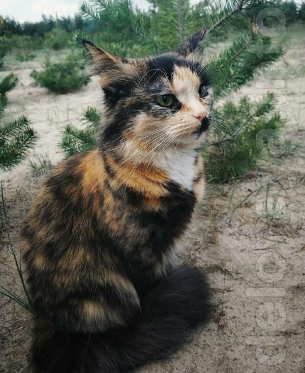 Кошка Злата. Отличительная особенность: чёрное пятнышко под носиком.