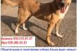 Общительная и позитивная собака Алька ищет семью!Возраст 2 года.