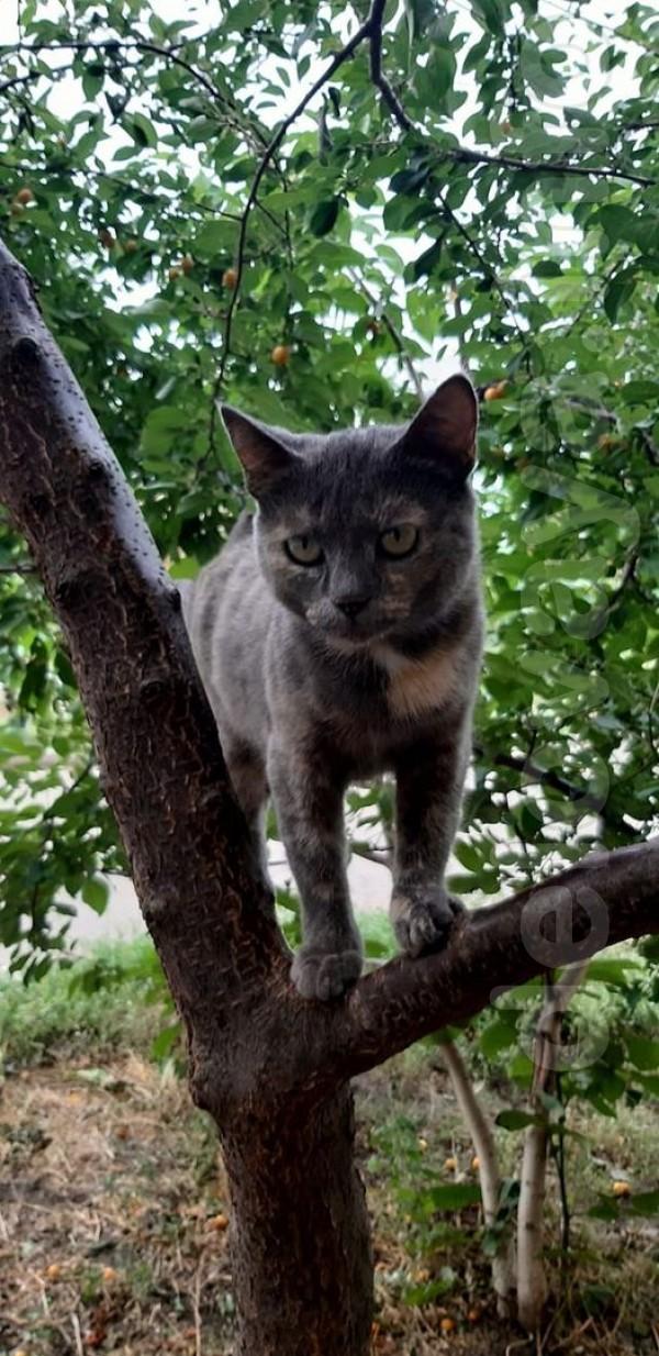 Очень нужен дом для молодой, красивой и очень ласковой кошечки. Кошка