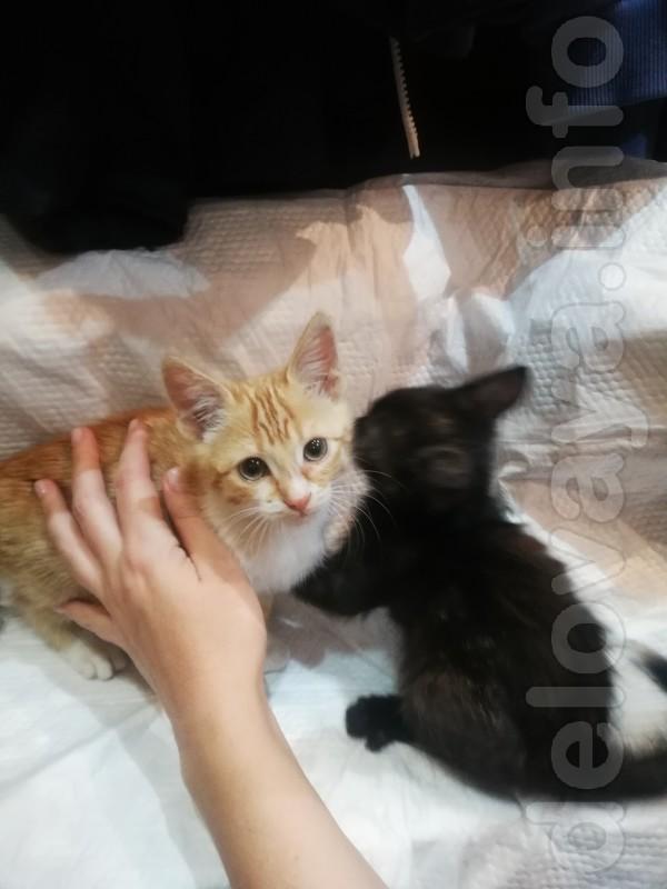 Подбросили Котят от домашн кошки-чистые толстенькие без блох. Котятам