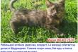 Рябенький котёнок (девочка, возраст 3-4 месяца) рчень нуждается в доме