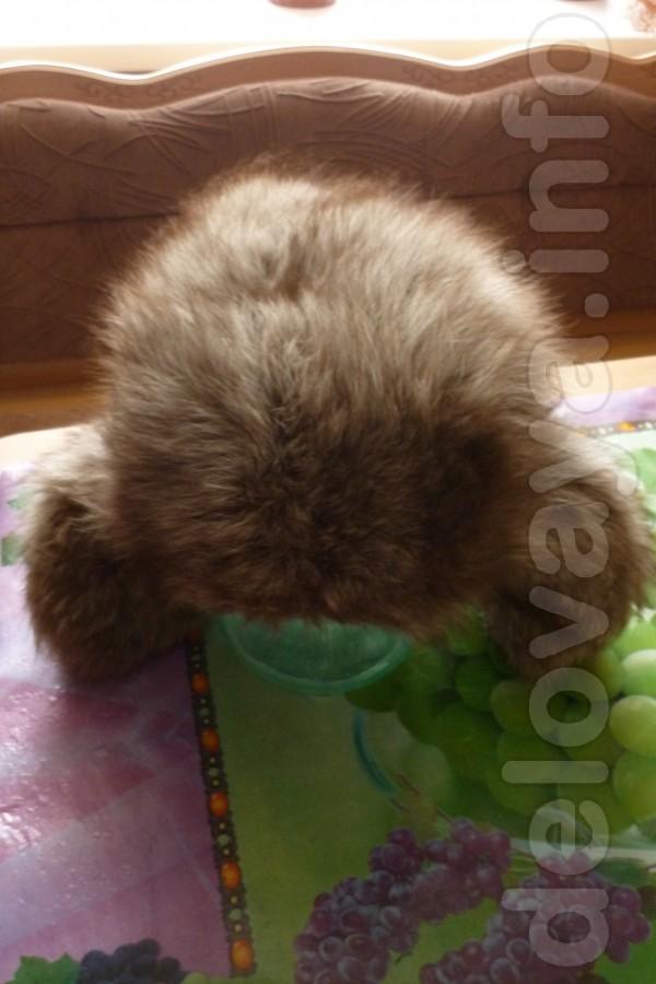 Шапка(песец) Зимушка в хорошем состоянии 150 грн,торг