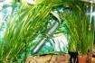 Продам красивые живые аквариумные растения на передний , средний и за фото № 1