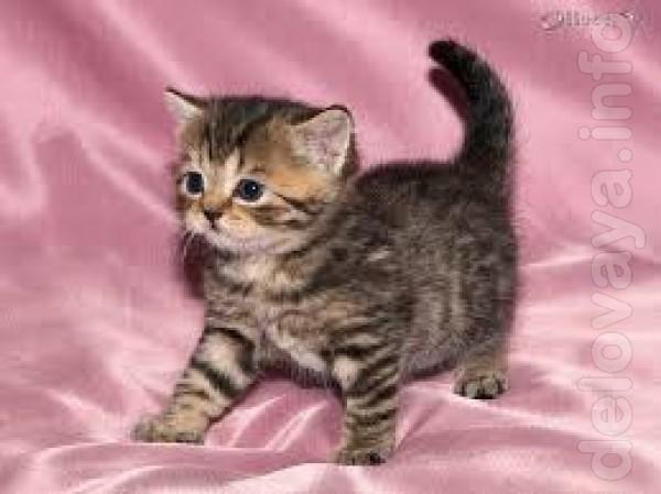 Отдам котят в хорошие руки,очень красивые,окрас тигровый и черно белы