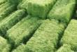 Продам отличное зеленое сено в тюках с привозом.Цена 30грн.