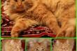 Яшка - шикарный мальчишка! Лучший в мире добрый кот! Милый Яшка - рыж