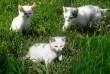 Два котика и одна кошечка ищут заботливых хозяев.  Возраст 2 мес. Едя