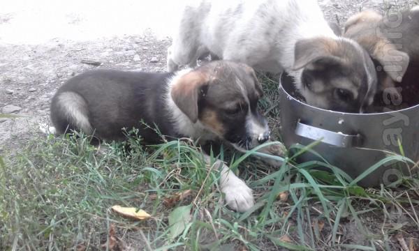 5 щеночков-ангелочков ищут любящего хозяина! Умные, красивые, ручные