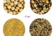 Вы можете заказать услугу идеальной очистки семян вблизи вашего произ